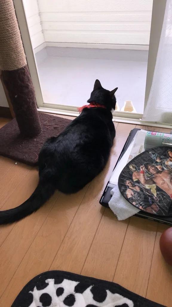 サンブランドハウス高知西店スタッフの塩見の飼い猫の画像です。